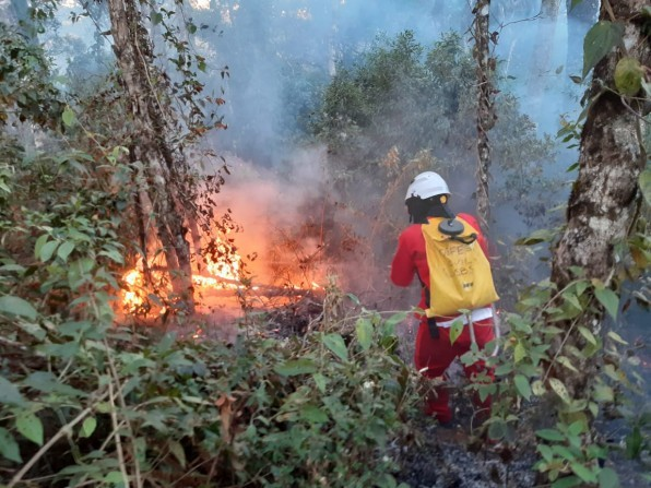 Governo de São Paulo promove campanha de conscientização para prevenir incêndios florestais